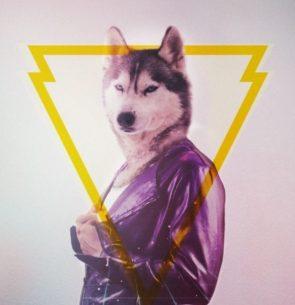 Florida Wolf